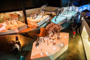 Houston museum 1